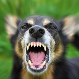 Missouri dog bite laws