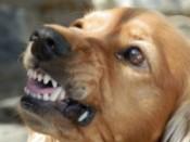 preventing dog bites_warning signs