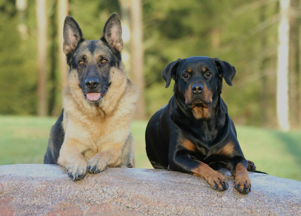 Aggressive Breed Dog Law