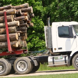 Logging truck_falling debris